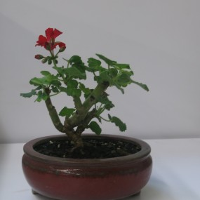 Nights Out – Instant Bonsai