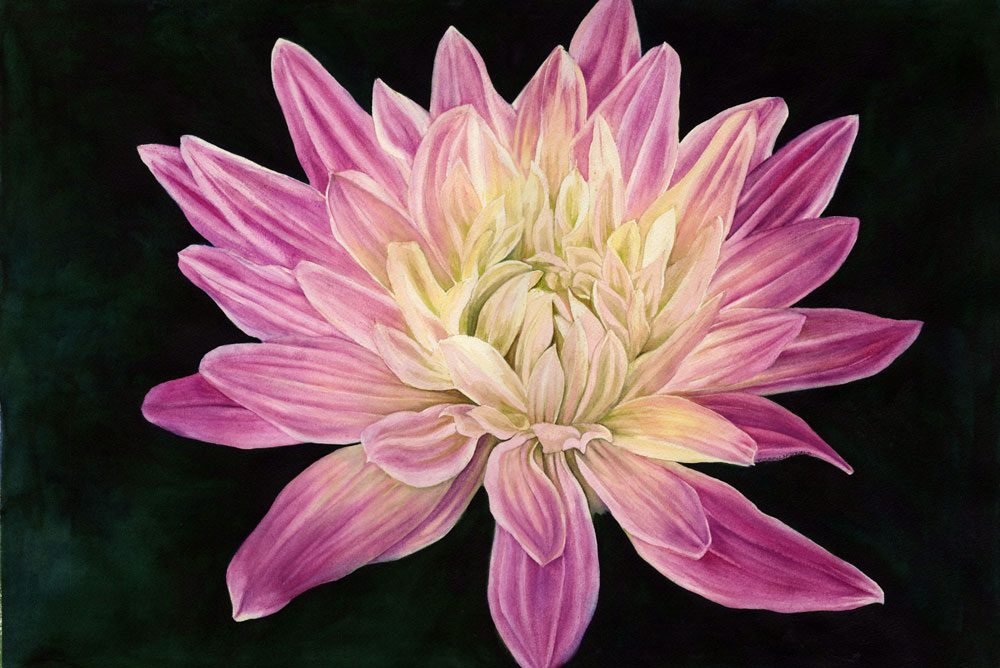 Dahlia by Kathy Simon McDonald $600