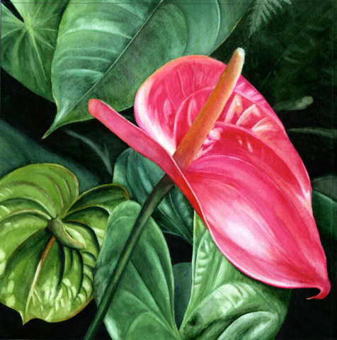 Anthurium by Kathy Simon-McDonald $550