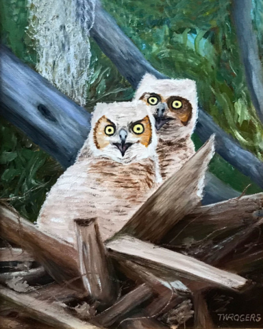 Young Owls by Todd Rogers, Oil, NFS