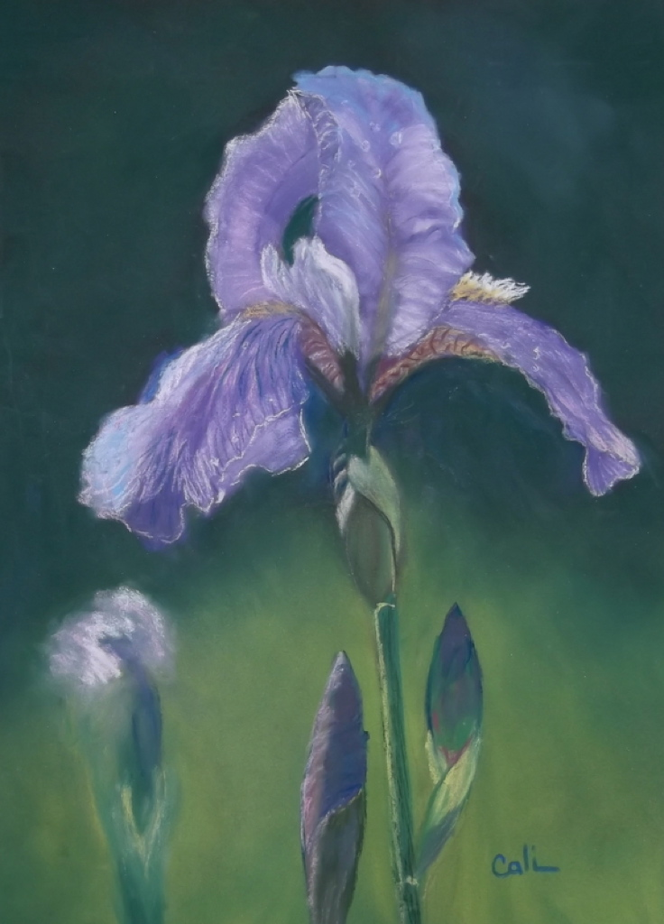 Bearded Iris by Calliope Thomas