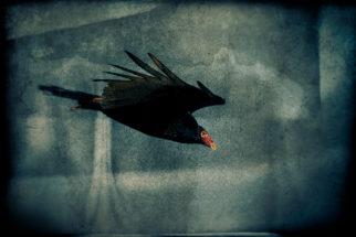 Wings of Black, Masque of Red by Gary Jones
