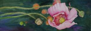 Poppy by Jacueline Clark