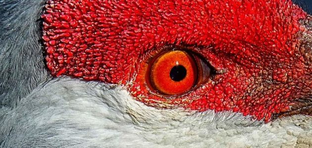 Red Hot by Nancy Martin
